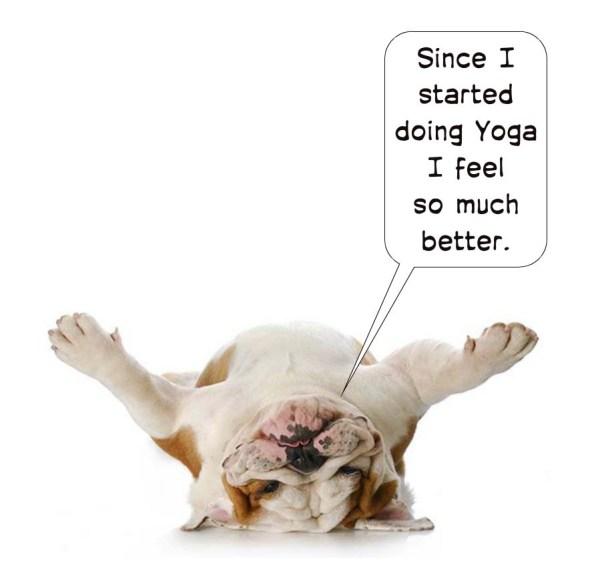 animal-comics-dog-doing-yoga