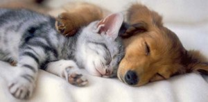 dog-and-cat-cuddle